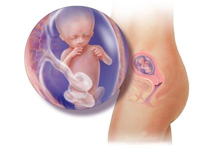Terhesség hétről hétre 14. hét